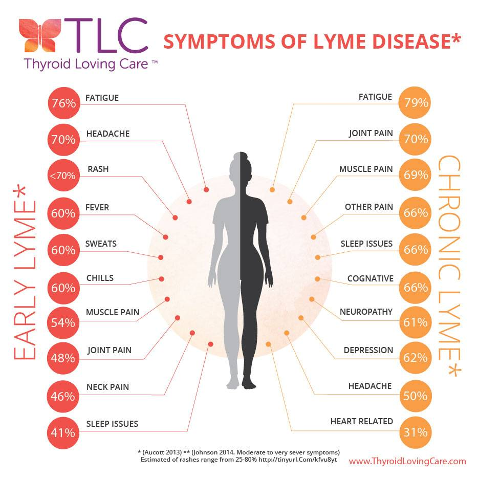 Ick! A Tick! Connections Between Lyme Disease and Hashimoto's You Need to Know